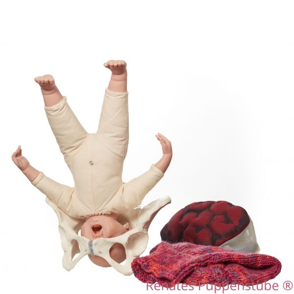 Set3:Pelvis, Foetus doll, Placenta, knitted uterus